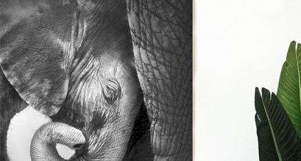 Elephant ⚫⚪ Wij zijn gek op fotodecoraties met olifanten! Door de nieuwste printer kunnen wij alle details van dit dier op plexiglas laten drukken. Geen pixels meer! Wat is jou favoriete dier?