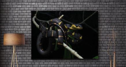Snake 🐍 Deze week staat bij ons in het thema van dieren! Welk dier zou jij graag op plexiglas in jouw woning willen? Kies een afbeelding die past bij jouw interieur. Zo komen de kleuren in jou woning nog beter naar voren. ✨